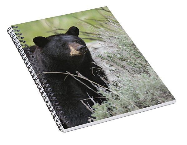 Black Bear Sow Spiral Notebook