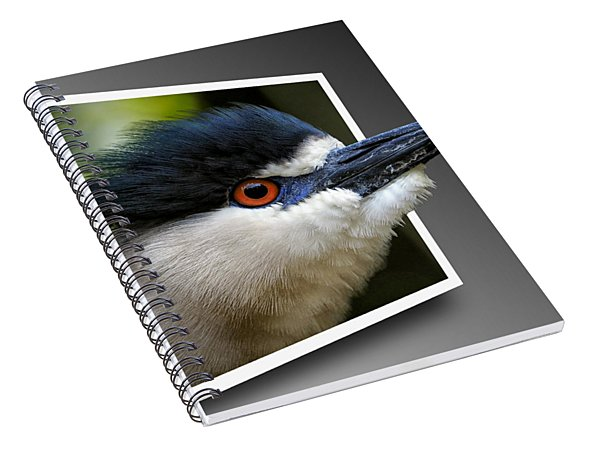 Black Crowned Night Heron Out Of Bounds Spiral Notebook