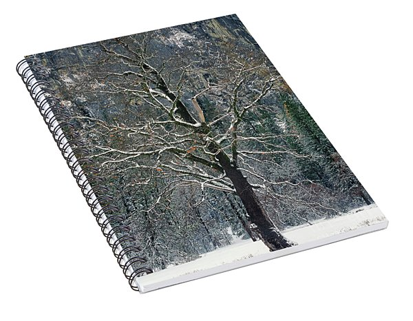 Spiral Notebook featuring the photograph Black Oak Quercus Kelloggii With Dusting Of Snow by Dave Welling