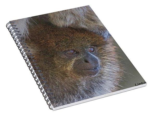 Bolivian Grey Titi Monkey Spiral Notebook