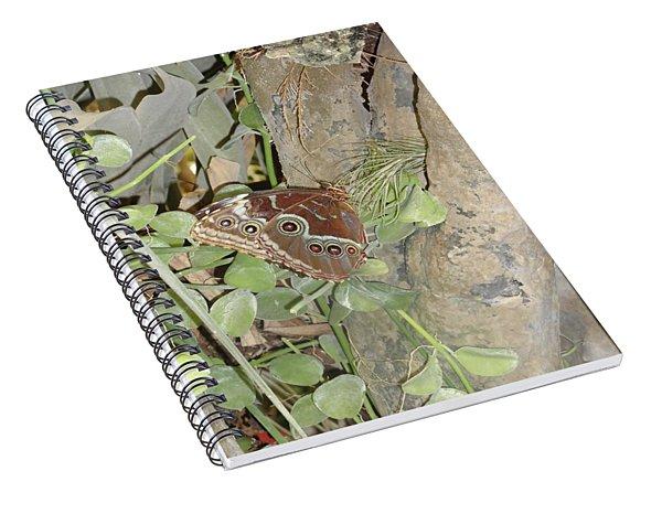 Brown Eyed Butterfly Spiral Notebook