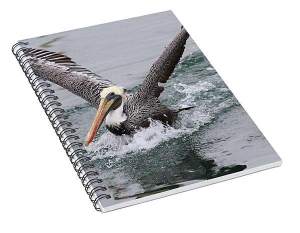 Brown Pelican Landing On Water . 7d8372 Spiral Notebook