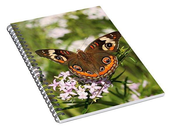 Buckeye Butterfly Posing Spiral Notebook
