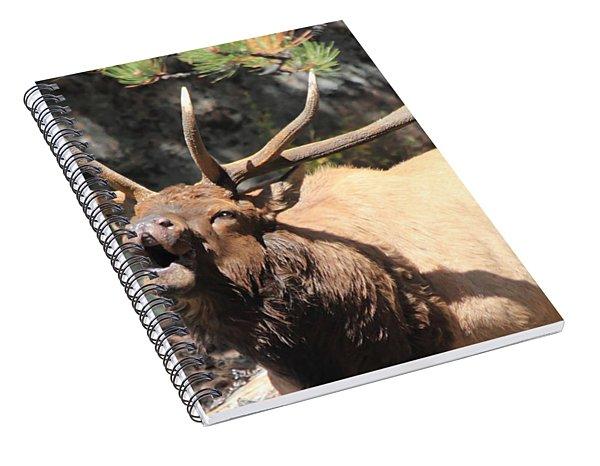 Bugling Bull Spiral Notebook