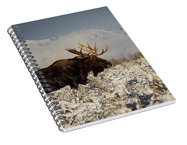 Bull Moose, Grand Teton National Park Spiral Notebook
