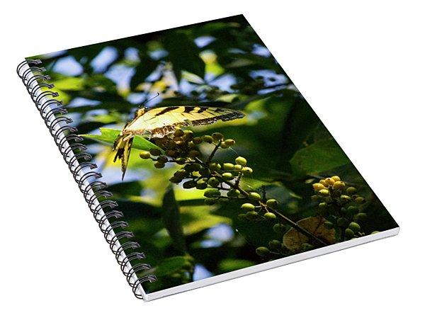 Butterfly Sunrays Spiral Notebook