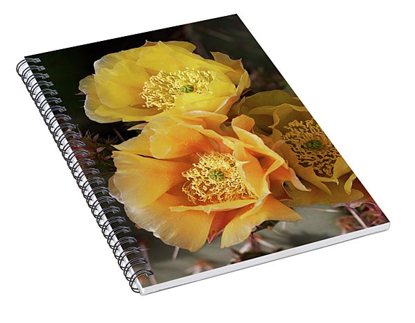Yellow Cactus Flowers Spiral Notebook