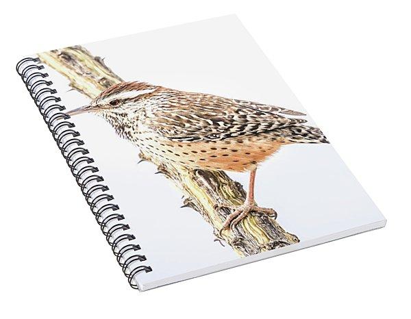 Cactus Wren # 1 Spiral Notebook