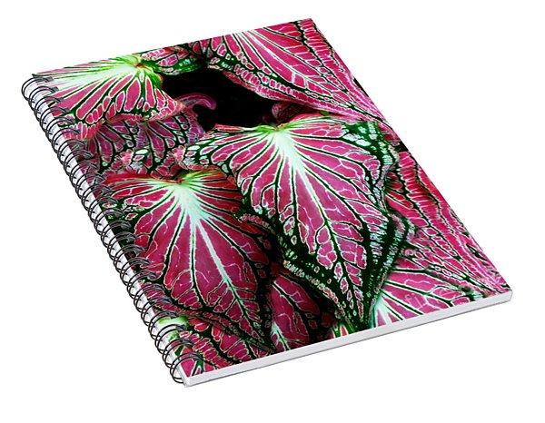 Caladium - Pot Hos Leaves Spiral Notebook