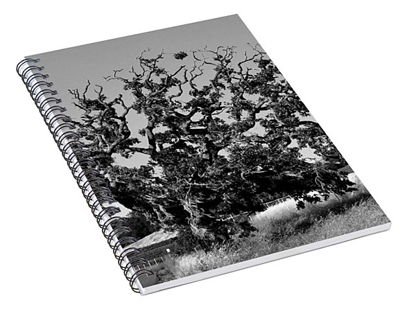 California Roadside Tree - Black And White Spiral Notebook