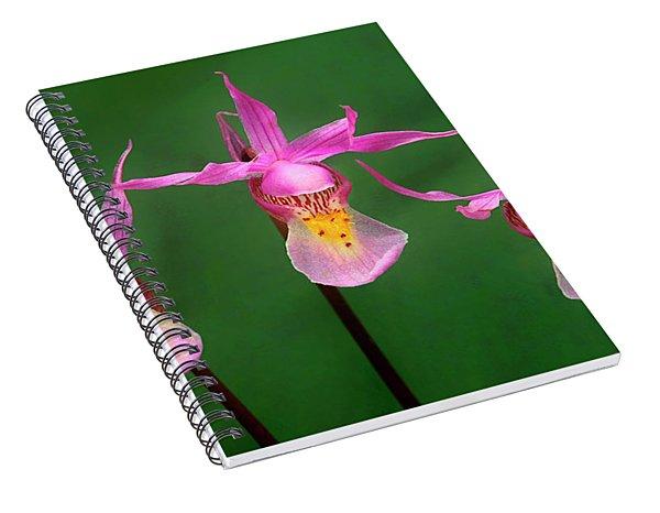Calypso Orchids Calypso Bulbosa Wild Wyoming Spiral Notebook