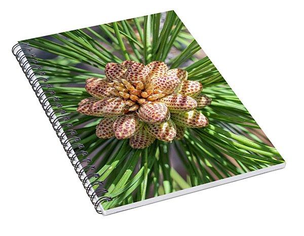 Captivating Pine Spiral Notebook