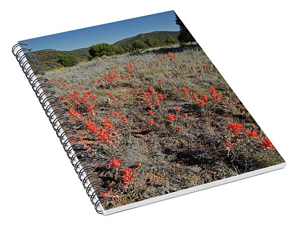 Carrizo Paintbrush V Spiral Notebook