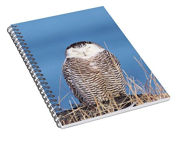 Centered Snowy Owl Spiral Notebook