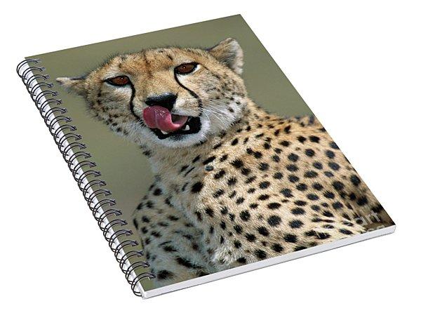Cheetah Licking  Spiral Notebook