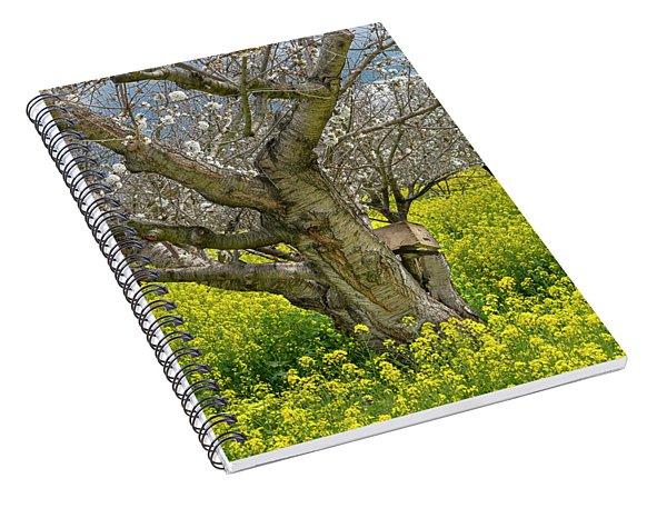 Cherry Orchard 8 Spiral Notebook