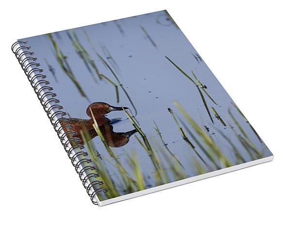 Cinnamon Teal Adult Male Spiral Notebook