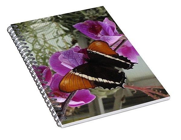 Color Clash Of Pink Flower Orange Black Butterfly Spiral Notebook