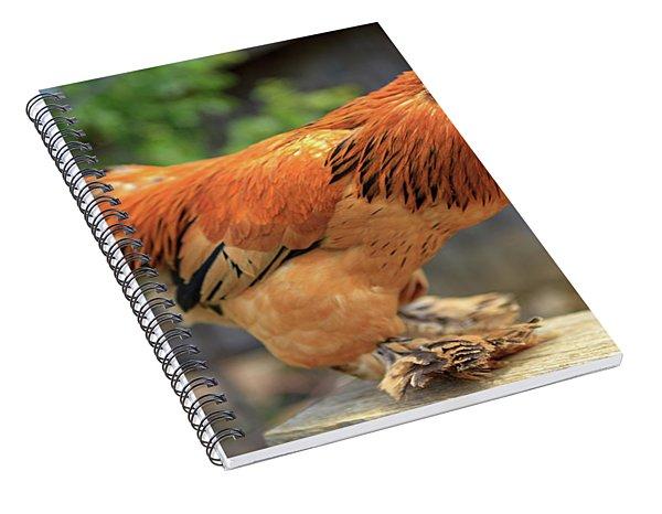 Colorful Chicken Spiral Notebook