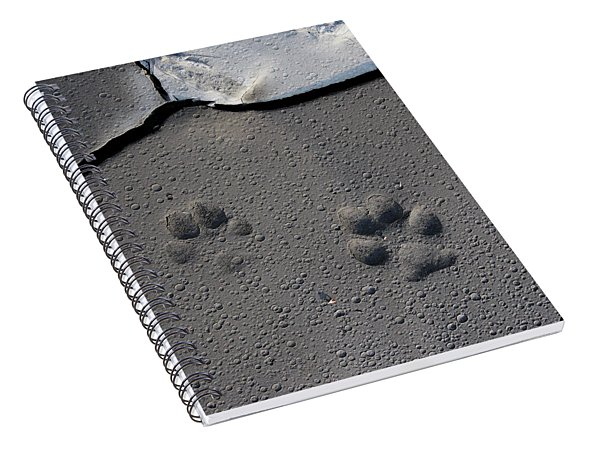 Coyote Tracks Spiral Notebook