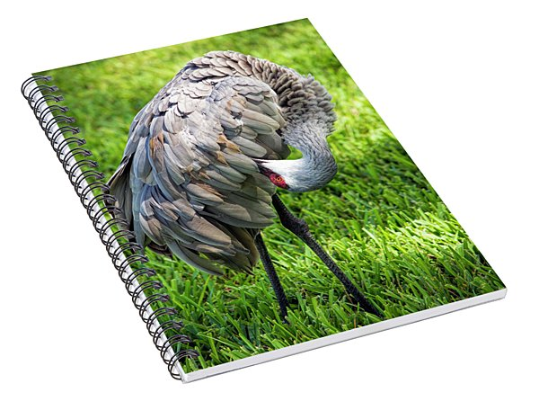 Crane Down Under Spiral Notebook