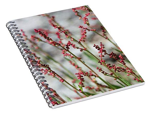 Crimson Field Spiral Notebook