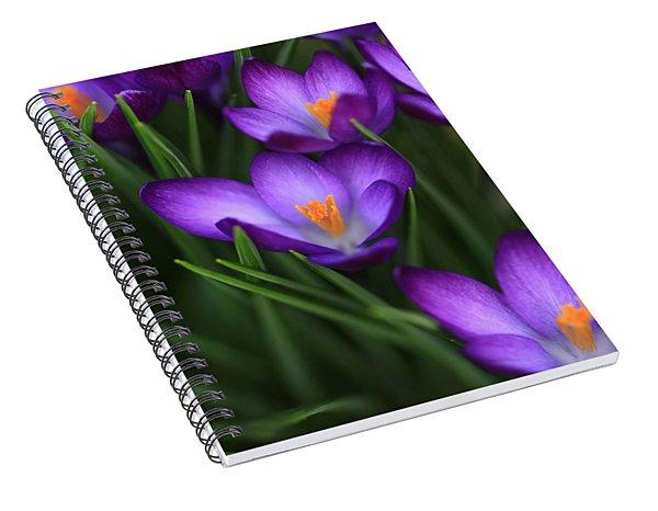 Crocus Vividus Spiral Notebook