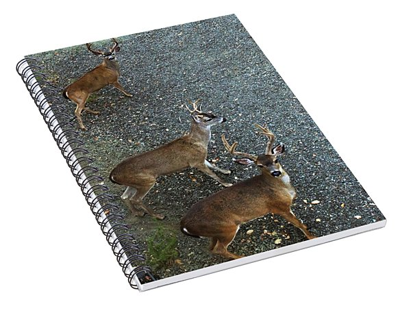 D8b6353 3 Mule Deer Bucks Ca Spiral Notebook