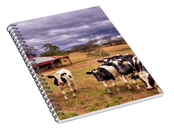Dairy Heifer Groupies The Red Barn Art Spiral Notebook