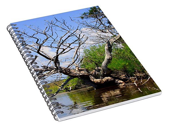 Dead Cedar Tree In Waccasassa Preserve Spiral Notebook