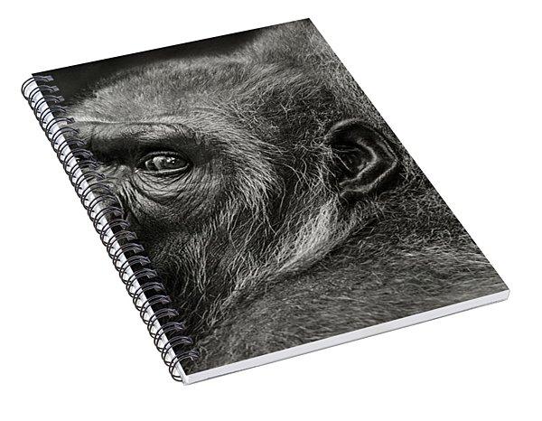 Desperation Spiral Notebook