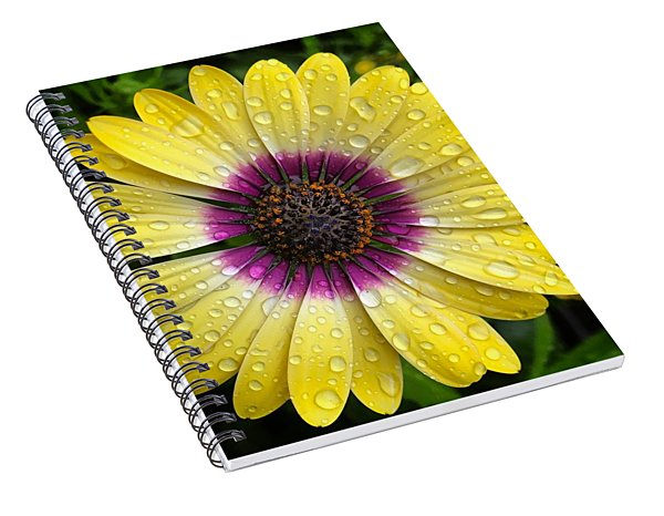 Dew Dropped Daisy Spiral Notebook