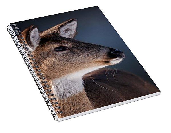 Doe Portrait - White Tailed Deer Spiral Notebook