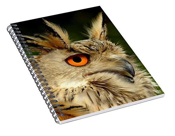 Eagle Owl Spiral Notebook