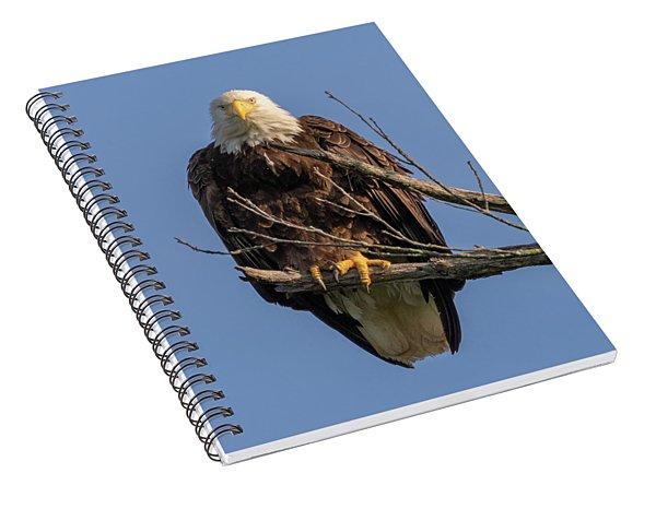 Eagle Stare Spiral Notebook