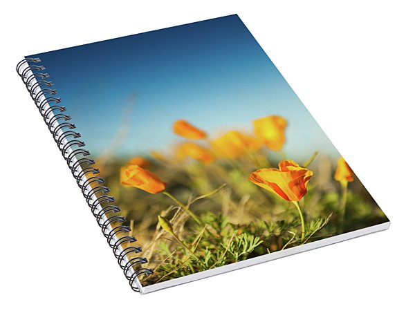 El Paso Poppies Spiral Notebook