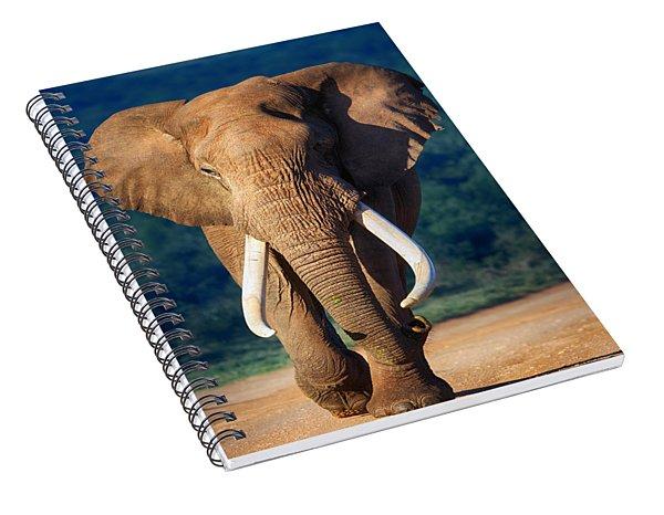 Elephant Approaching Spiral Notebook