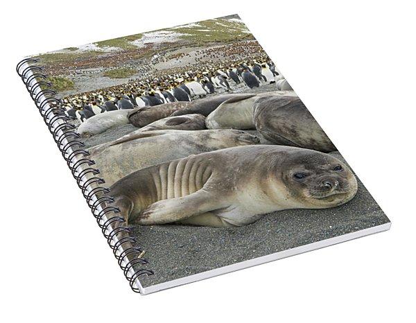 Elephant Seal Weaner Pups Spiral Notebook