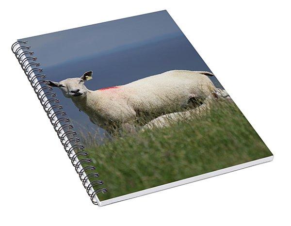 Ewe Guarding Lamb Spiral Notebook
