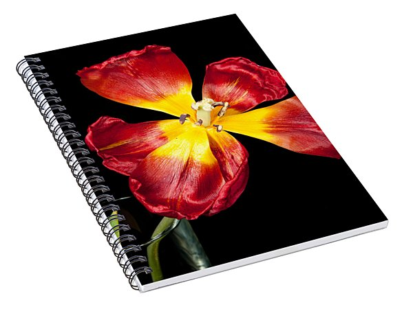 Fading Beauty Spiral Notebook