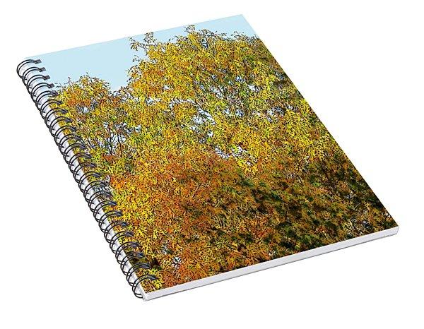 Fall Tree Spiral Notebook