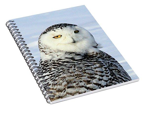 Female Snowy Owl Spiral Notebook