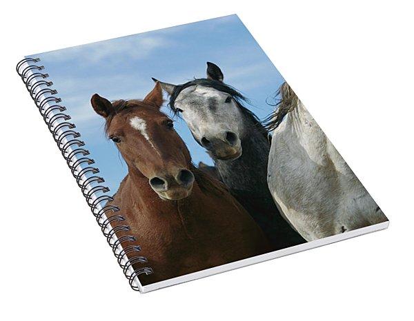 Fifteen Mile Mustang Herd  Spiral Notebook