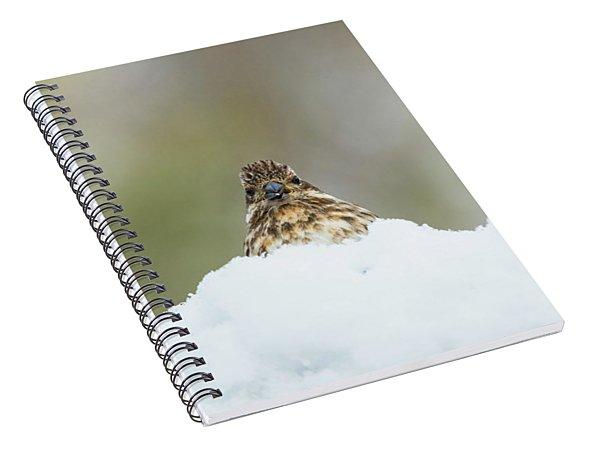 Female Purple Finch Spiral Notebook