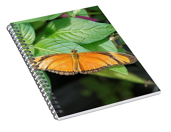 Flambeau Butterfly Spiral Notebook