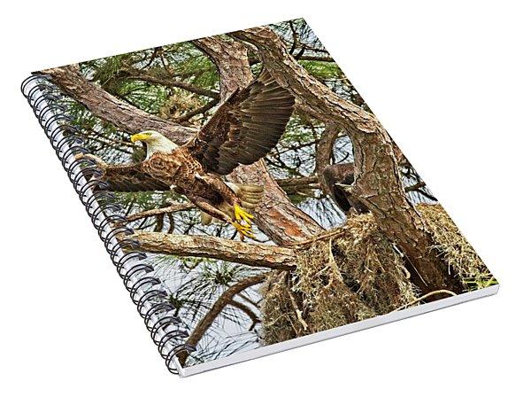 Florida Bald Eagle Spiral Notebook
