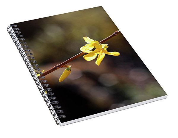 Forsythia Flowers Spiral Notebook