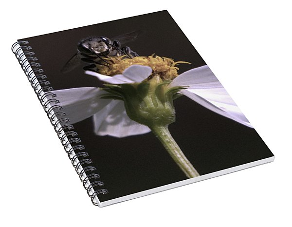 Frontal View Of A Bee On A Flower Spiral Notebook