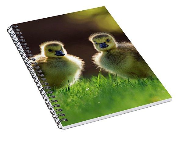 Fuzzy Babies Spiral Notebook