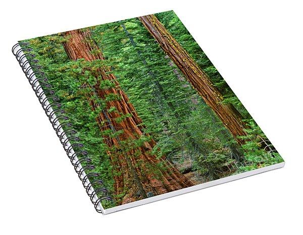 Giant Sequoias Sequoiadendron Gigantium Yosemite Np Ca Spiral Notebook